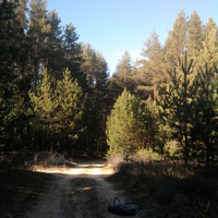 лес, в том месте где Прогон
