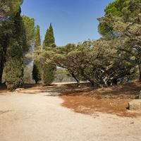 Сосны и кипарисы в Филеримском монастыре