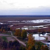 Сестрорецкое болото.Есть клюква ;-)