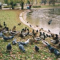 в парке 50-летия Октября