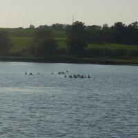 озеро в Жуковском