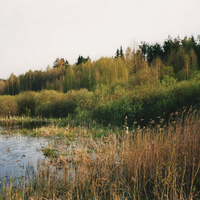 лесное озеро за Отцедой