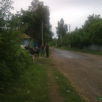 Раннее летнее утро в Сварково