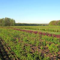 Весна в Заокских Питомниках. Деревня Ушаковка, Заокский район. Май 2012 г.