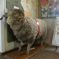 Баран-рекордсмен в районном музее