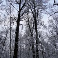 Зимнии деревья