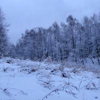 Зима, вечер, дендропарк