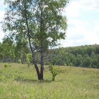 лес на окраине ержино