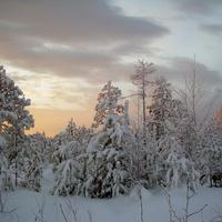Западная Сибирь. Морозное утро.
