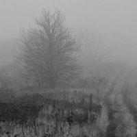 когда с туман по пути....