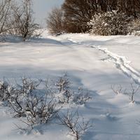 в зимнем лесу...