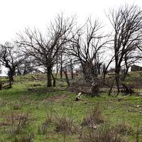 руины хутора
