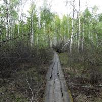 Деревянная тропинка