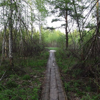 Деревянная пешеходная дорожка