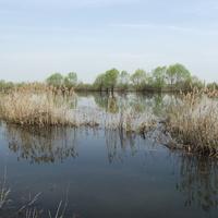Весенняя речка Натынка