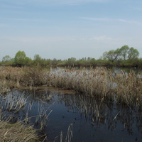 Весенняя Натынка и пруд