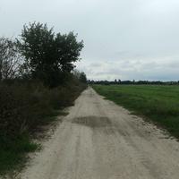 Дорога у поля