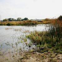 Река УСМАНКА в Сомове. Воронеж.