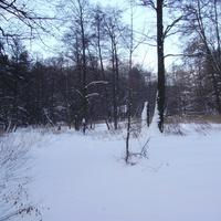 Замёрзшая Хрипань сливалась с окружающим лесом