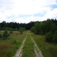 Лесная дорога. Севернее деревни Антушово