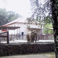 алматинский зоопарк/Almaty Zoo