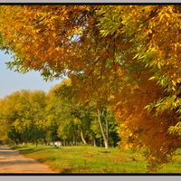 Стрелечье.осень