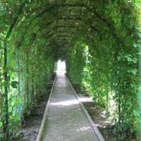 Алея на подвір'ї монастиря