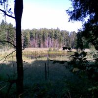 Озеро в лесу возле д. Заболотье (на Рудаках)