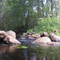 Река впадающая в озеро возле д. Заболотье