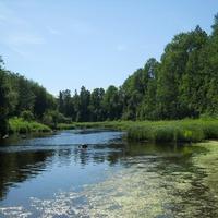Река Лынна