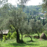 масличный сад