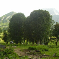 буковые деревья в ложбине у ручья