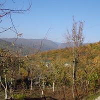 ноябрьские сады