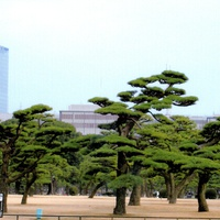 Tokyo, Close to Imperial palace