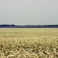 Курганское поле