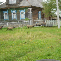 село сера