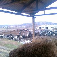 Зимняя ферма