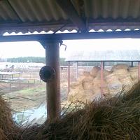 Зимняя ферма. Сено
