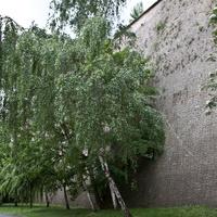 В Лобковичковом парке