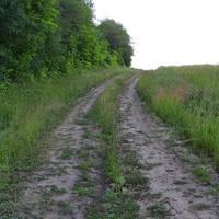 Дорога вдоль леса
