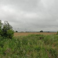 Мясное, поле