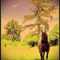 Ходят кони...