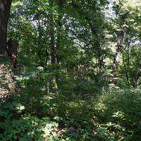Липовый парк (заброшенный) усадьбы Шаховских