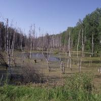 Болото на реке Болгун