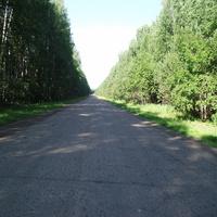 Дорога на Тару