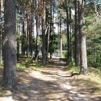 Красивый поселковый парк