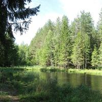 Красивая природа, парк, пруд