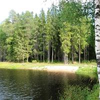 Красивая природа, лес, парк, пруд