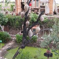 Кувшиновое дерево в музее под открытым небом