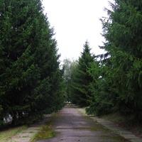 Ялинкова алея